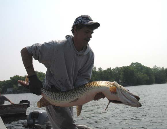 5 feet long and 48 pounds. Wow!